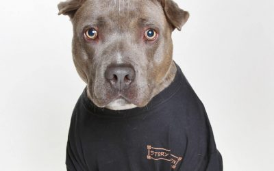 Not only is Story Tavern Dog Friendly, our T-Shirts are too!